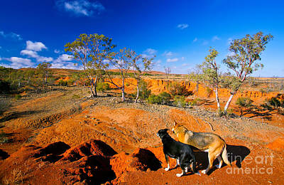 Kelpie Photograph - Mundi Mundi Plain Wash Away  by Bill  Robinson