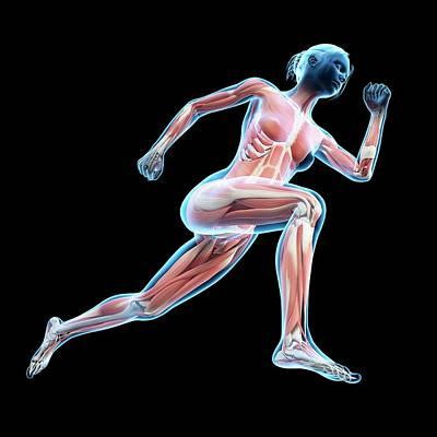 Muscular System Of Jogger Art Print by Sebastian Kaulitzki