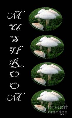 Art Print featuring the photograph Mushroom Art Collection 1 By Saribelle Rodriguez by Saribelle Rodriguez