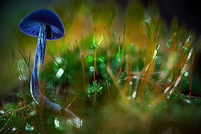 Purple Mushroom Photograph - Mushroom Magic by Dirk Ercken