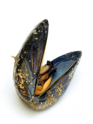 Moules Photograph - Mussel by Sinisa Botas