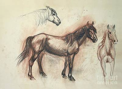Maureen Drawing - Mustang Mare Daisy by Maureen Love
