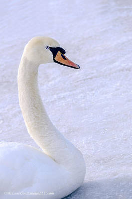 Fauna Photograph - Mute Swan On Ice by LeeAnn McLaneGoetz McLaneGoetzStudioLLCcom