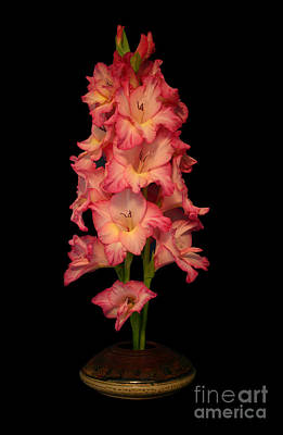 Photograph - My Gladiolus by Annlynn Ward