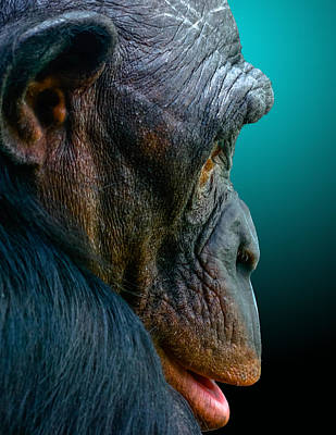 Humanlike Photograph - My Good Side by Brian Stevens