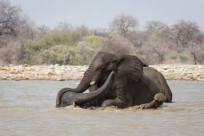 Water Play Photograph - Namibia, Etosha National Park, Klein by Jaynes Gallery