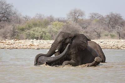 Bathe Photograph - Namibia, Etosha National Park, Klein by Jaynes Gallery