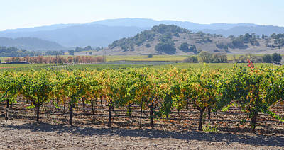 Napa Valley Drawing - Napa Valley California Vineyard In Fall Autumn by Brandon Bourdages