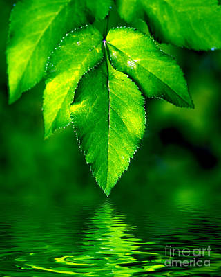 Light Photograph - Natural Leaves Background by Michal Bednarek