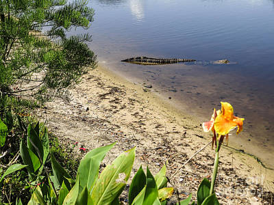 Canna Photograph - Nature In Florida by Zina Stromberg