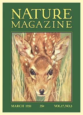 Fawn Digital Art - Nature Magazine by Gary Grayson