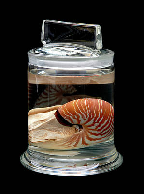 Nautilus Art Print by Natural History Museum, London