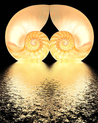 Robert Jensen Photograph - Nautilus Reflection by Robert Jensen