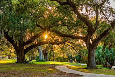 Live Oaks Digital Art - New Orleans - City Park  by Steve Harrington