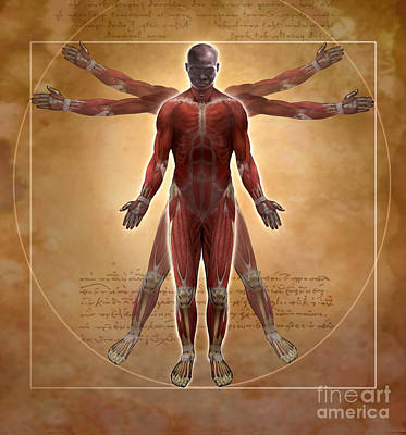 Vitruvius Photograph - New Vitruvian Man by Jim Dowdalls