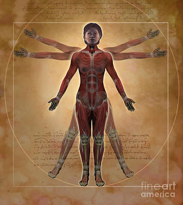Vitruvius Photograph - New Vitruvian Woman by Jim Dowdalls