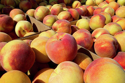 Newly Harvested Peaches On A Farm Art Print