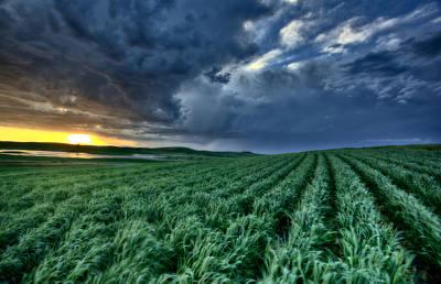 Beautiful Vistas Digital Art - Newly Planted Crop by Mark Duffy