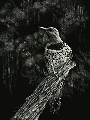 Drawing - Northern Flicker by Sandra LaFaut