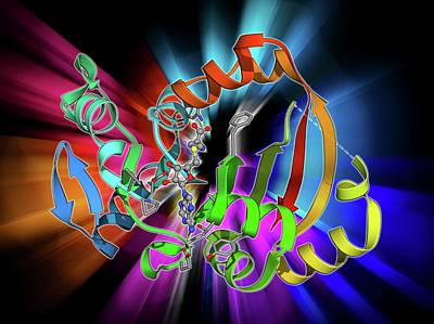 Molecular Structure Photograph - Npma Methyltransferase by Laguna Design