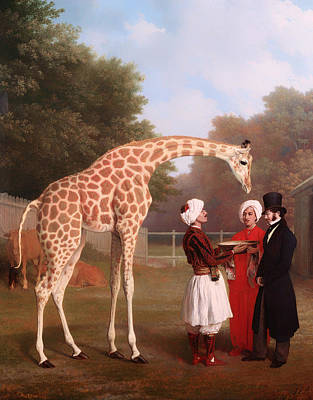 Inspecting Painting - Nubian Giraffe by Mountain Dreams