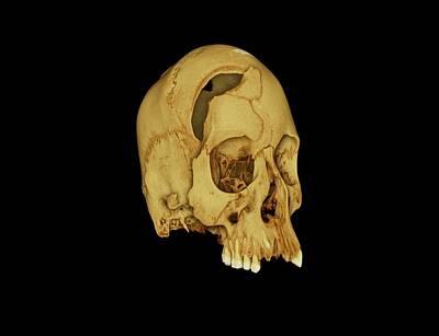 Nubian Skull Art Print by Dan Sykes/natural History Museum, London