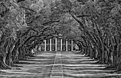 Plantation Digital Art - Oak Alley Bw by Steve Harrington