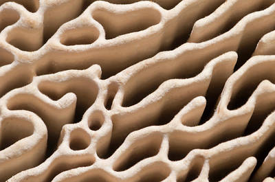 Bracket Fungus Photograph - Oak Mazegill Pore Structure Abstract by Nigel Downer