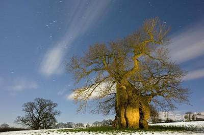 Snowy Night Photograph - Oak Quercus Robur by Bob Gibbons