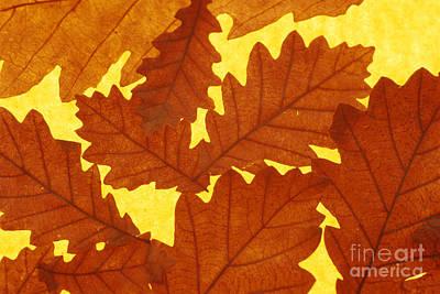 Photograph - Oak Quercus Sp. Leaves by David Aubrey