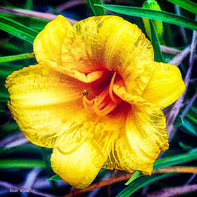 Photograph - Oakwood Daylily  by Don Vine