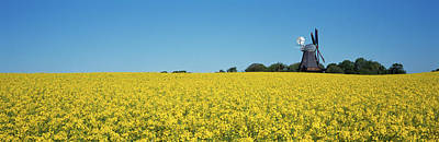 Brassica Photograph - Oilseed Rape Brassica Napus Crop by Panoramic Images