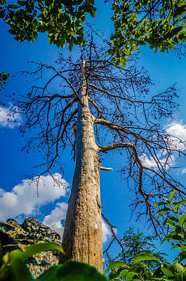 Classic Golf - Old And Ancient Dry Tree On Top Of Mountain by Alex Grichenko