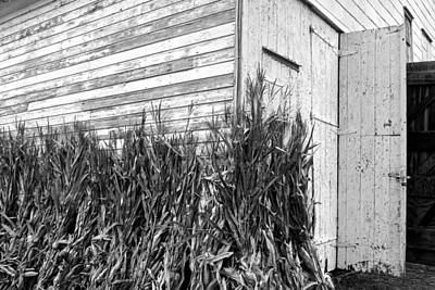 Monochromatic Photograph - Old Barn And Cornstalks by Photographic Arts And Design Studio