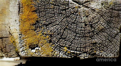 Photograph - Old Log by France Laliberte