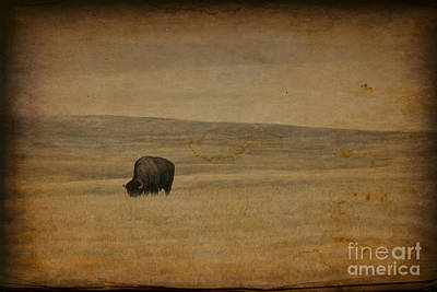Western Themed South Dakota Bison  Art Print