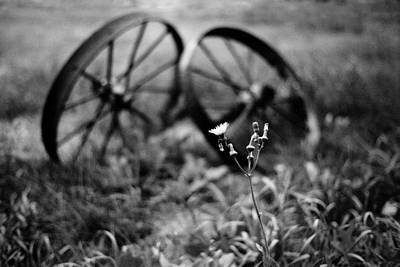 Old Wheels And Dandelion Art Print by Donald  Erickson