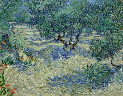 Kansas Oil Painting - Olive Orchard by Vincent van Gogh