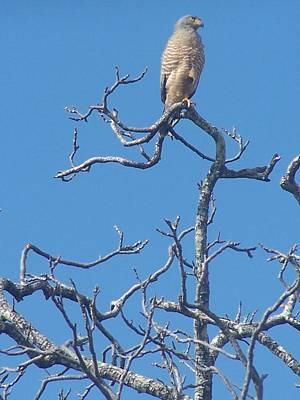 Eagle Photograph - On A Perch by Jennifer Robin