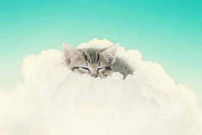 Tabby Cat Photograph - On Cloud Nine by Amy Tyler