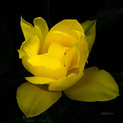 Photograph - One Yellow Tulip by Julie Palencia