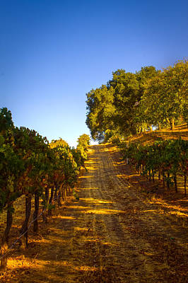 Photograph - Opolo Winery by Bryant Coffey
