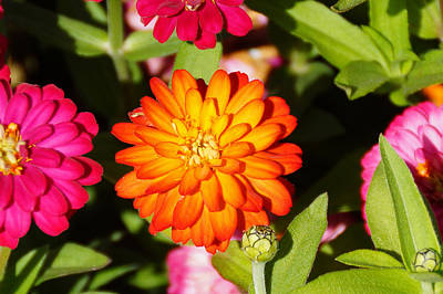 Landscape Photograph - Orange Flower by Gloria Pasko