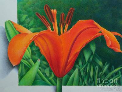 Orange Lily Art Print by Pamela Clements