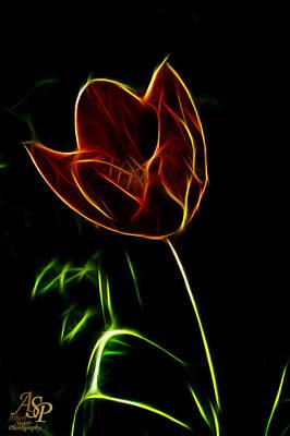 Photograph - Orange Tulip by Albert Seger