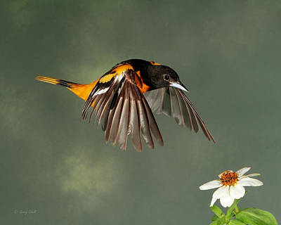 Photograph - Orange You Pretty by Gerry Sibell