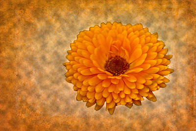 Photograph - Orange Zinnia by Bill Barber