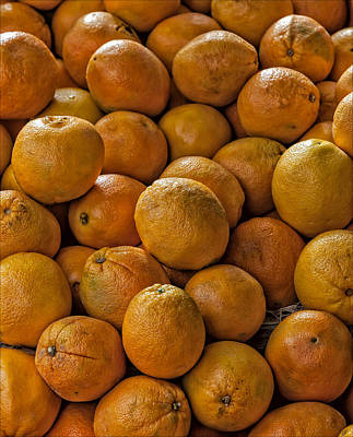 Farm Life Paintings Rob Moline - Oranges by Robert Ullmann