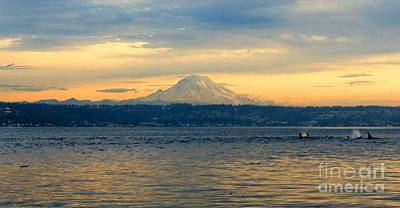 Orca Family And Mt. Rainier Art Print by Gayle Swigart