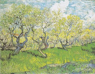 Painting - Orchard In Blossom by Celestial Images